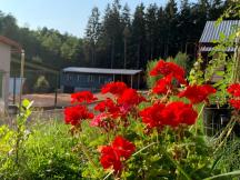 Léto v táboře